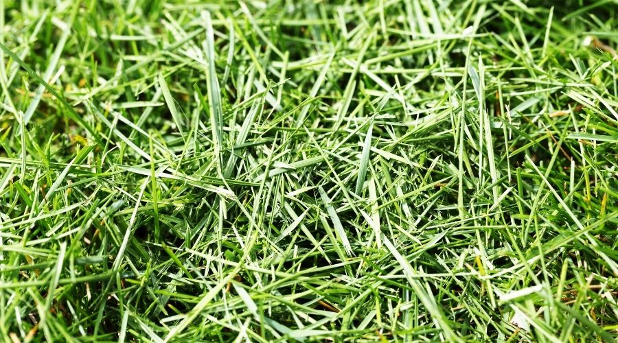 Green grass clippings that were recently cut.